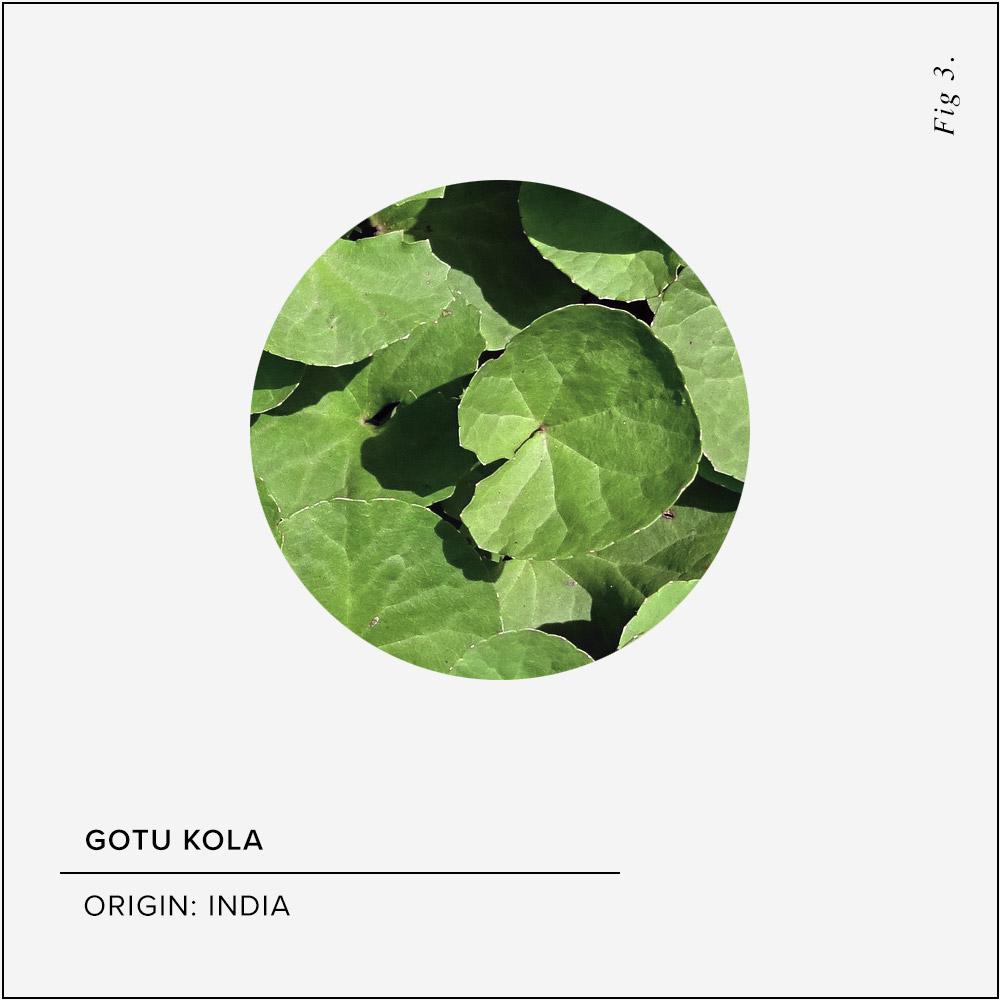 Gotu Kola Skin Benefits