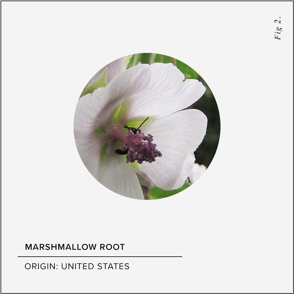 Marshmallow Root Skin Benefits